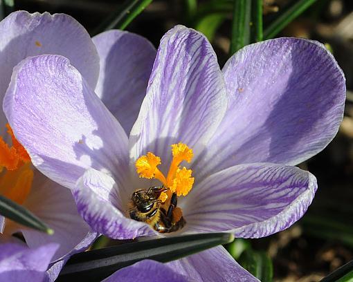 Has Spring Sprung????-dsc_5989-2-800.jpg