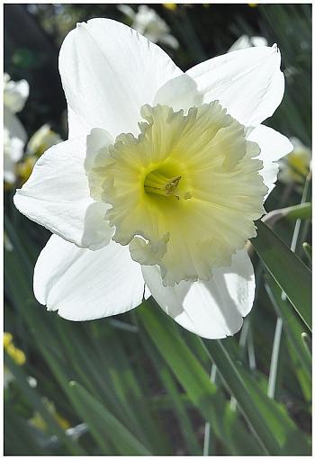 Has Spring Sprung????-_dsc5079c.jpg