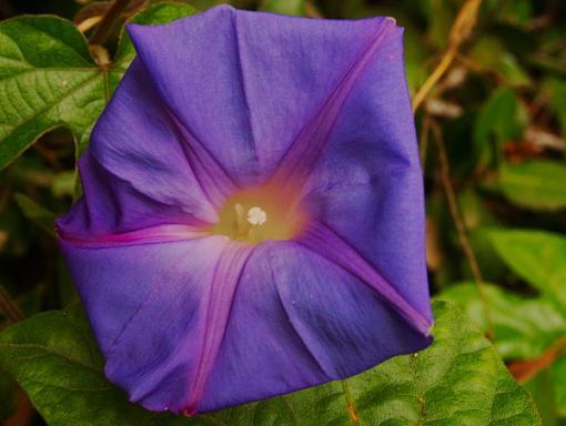 Has Spring Sprung????-blue-glory.jpg