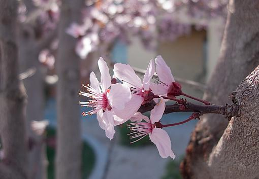 Has Spring Sprung????-img_3787.jpg