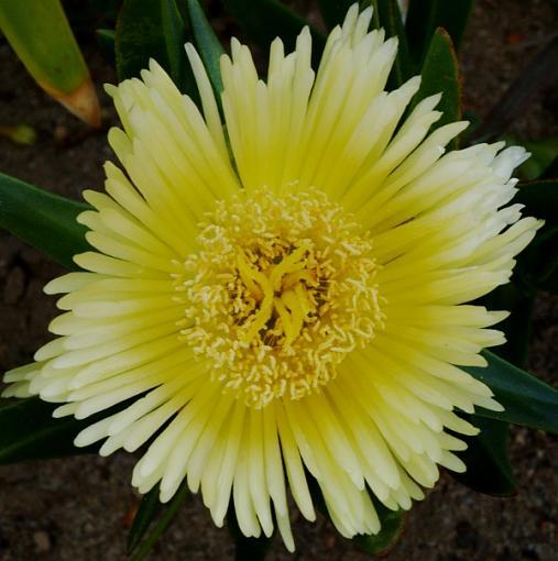 Has Spring Sprung????-yellow.jpg