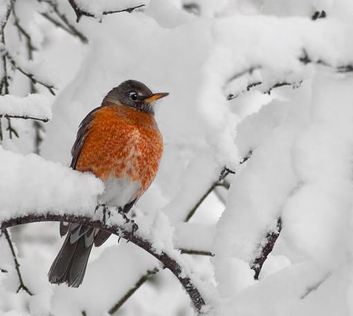 Winter returns - two opinions...-dsc08932_edited-1.jpg