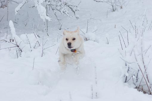 Winter returns - two opinions...-dsc08938_edited-1.jpg