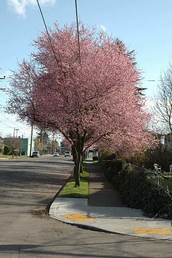 Has Spring Sprung????-dsc_5852web.jpg