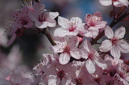 Has Spring Sprung????-dsc_5876web.jpg