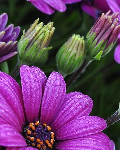 Has Spring Sprung????-csc_7146.jpg