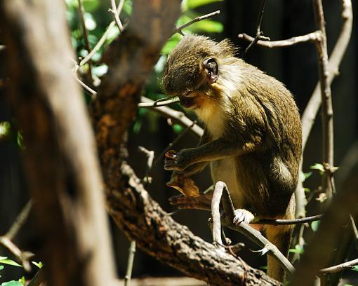Monkeying around-dsc_1288-copy.jpg