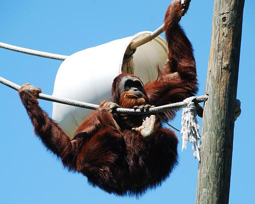 Monkeying around-dsc_1323-copy.jpg
