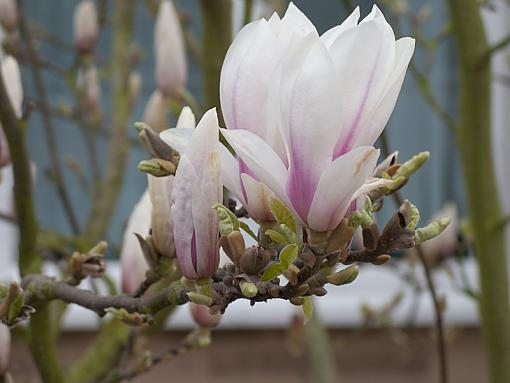 Has Spring Sprung????-img_4324.jpg