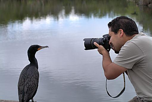 Capture a Photographer-everglades_cormerant_marlin129.jpg