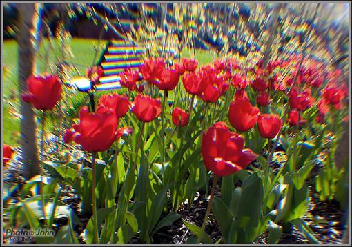 Has Spring Sprung????-_mg_4606.jpg