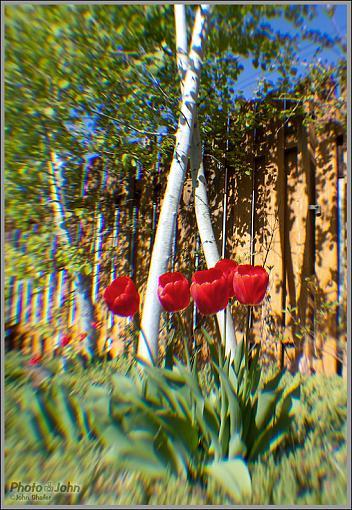 Has Spring Sprung????-_mg_4624.jpg