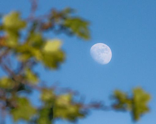 Daytime moon-20090603-img_0192.jpg
