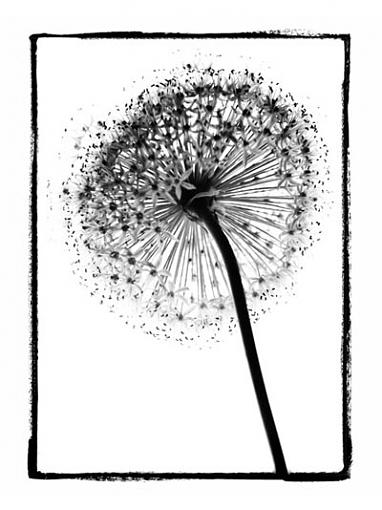 flora-img_7025-copy.jpg