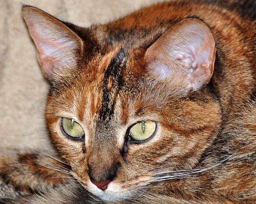 Picture of my wife's kitty-dsc_0050-copy.jpg