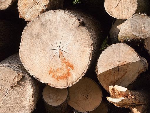 Logs again-img_5411.jpg