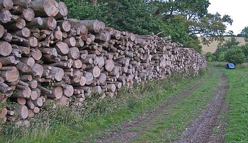 Logs again-img_5462.jpg