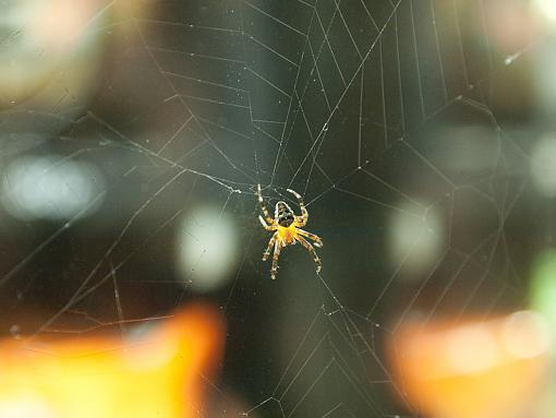 Incy Wincy Spider-_9051171.jpg