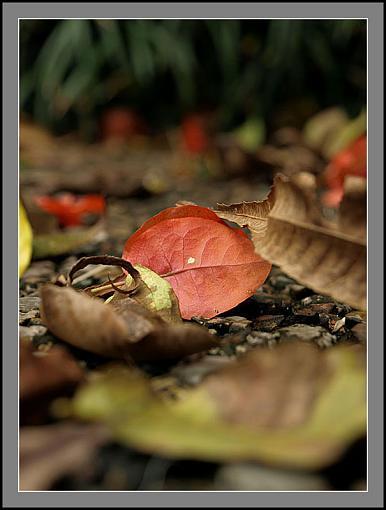 Fall Foliage Photo Gallery-fall8.jpg