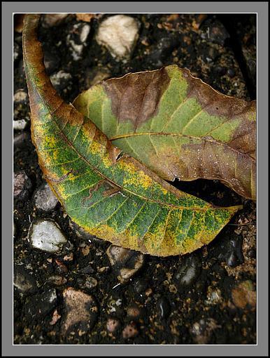 Fall Foliage Photo Gallery-fall3.jpg