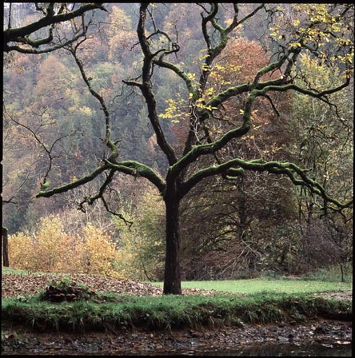 Fall Foliage Photo Gallery-1441-16.jpg