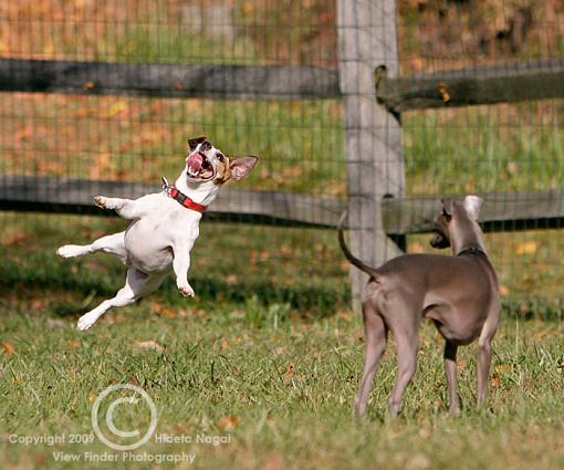 Larry the Levitating Dog-levitating-dog-1.jpg