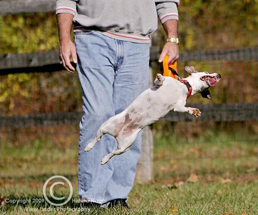 Larry the Levitating Dog-levitating-dog-2.jpg