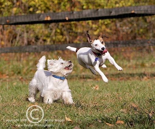 Larry the Levitating Dog-levitating-dog-3.jpg