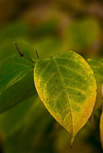 Fall Foliage Photo Gallery-post.jpg