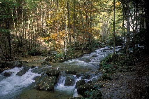 Fall Foliage Photo Gallery-s08-194.jpg