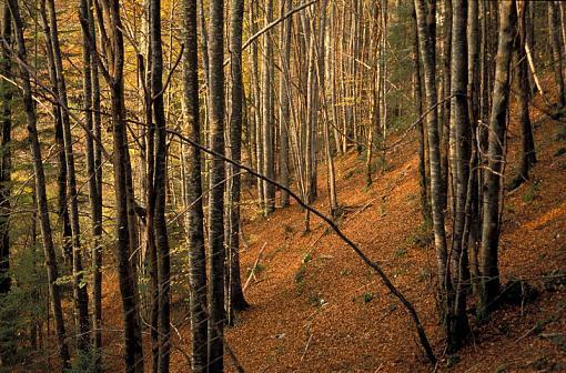Fall Foliage Photo Gallery-s08-247.jpg