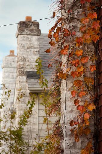 Fall Foliage Photo Gallery-fall-foliage-brooklyn.jpg