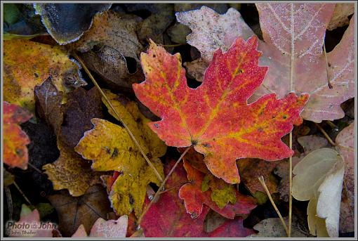 Fall Foliage Photo Gallery-_mg_1730.jpg