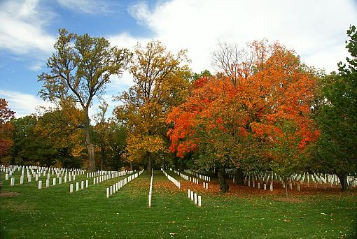 Fall Foliage Photo Gallery-arlington-3.jpg