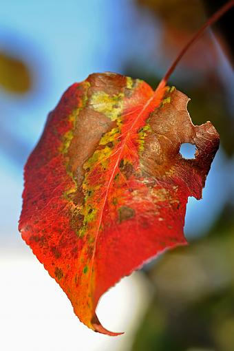 Fall Foliage Photo Gallery-dsc_6540-2-800.jpg