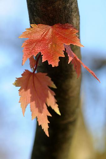 Fall Foliage Photo Gallery-dsc_6562-2-800.jpg