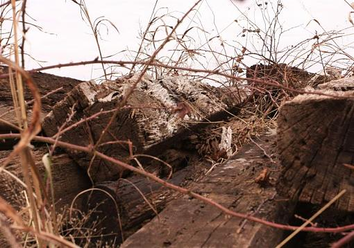 Weathered, Battered and Neglected-img_6853-medium-.jpg