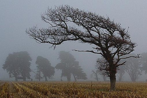 Your Favorite Image of 2009-foggytree3.jpg