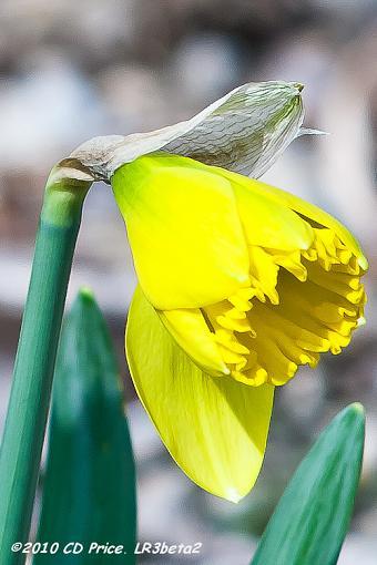 Spring Color 2010-springsprung10-3.jpg