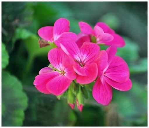 Spring Color 2010-csc_3772a1c.jpg