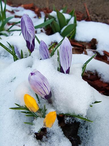 Spring Color 2010-img_1261b.jpg