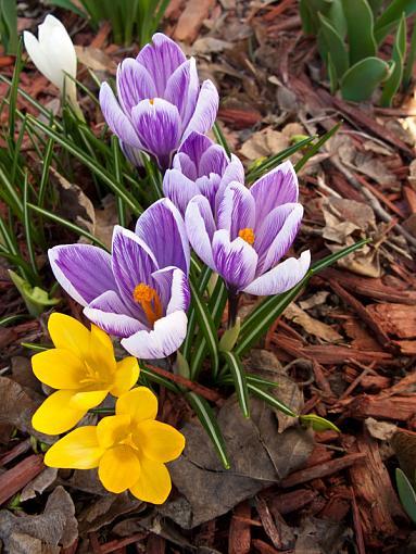 Spring Color 2010-img_1269.jpg