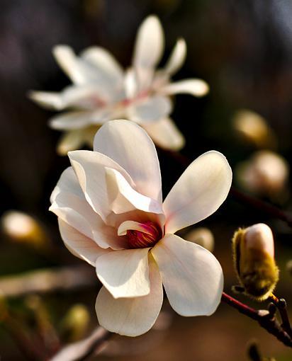 Spring Color 2010-cherryblossom.jpg