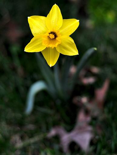 Spring Color 2010-yellowflower2.jpg