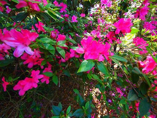 Spring Color 2010-p4052277.jpg