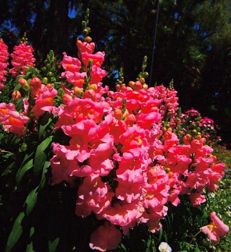 Spring Color 2010-p4052280.jpg