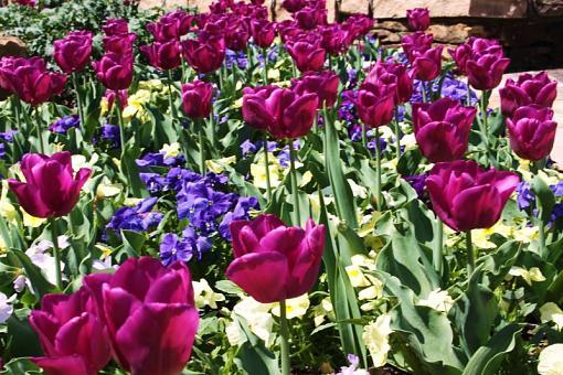 Spring Color 2010-spring-resize2.jpg