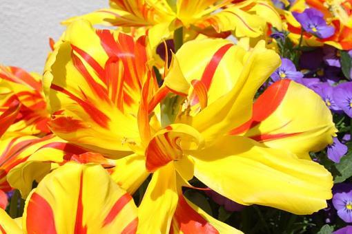 Spring Color 2010-spring-resize3.jpg