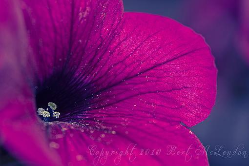 Spring Color 2010-spring002.jpg