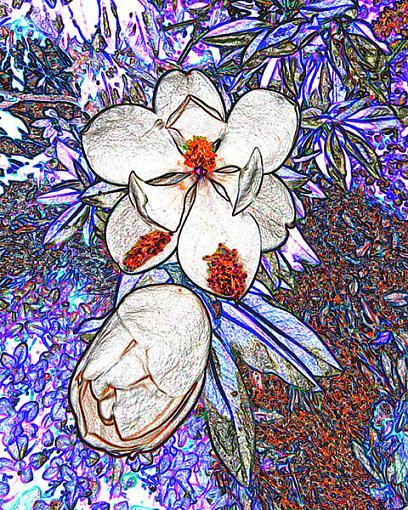 Color adjustment in PhotoShop-_dsc8808.jpg